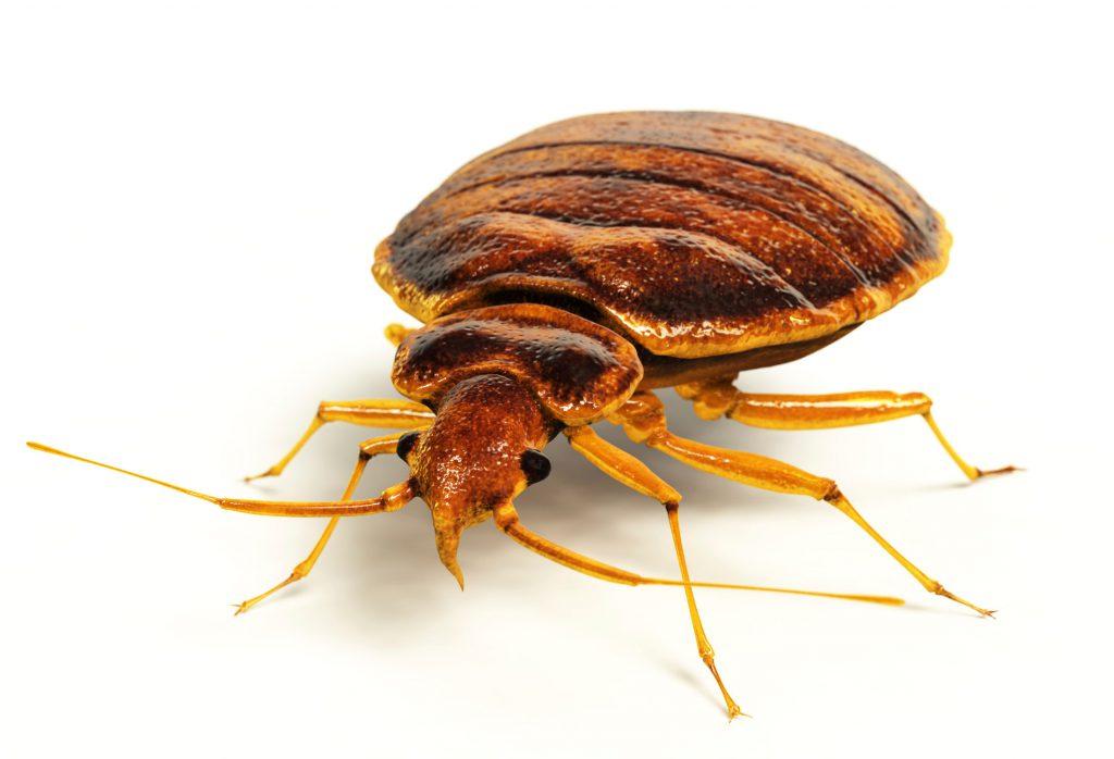 Bed Bugs in Saskatchewan