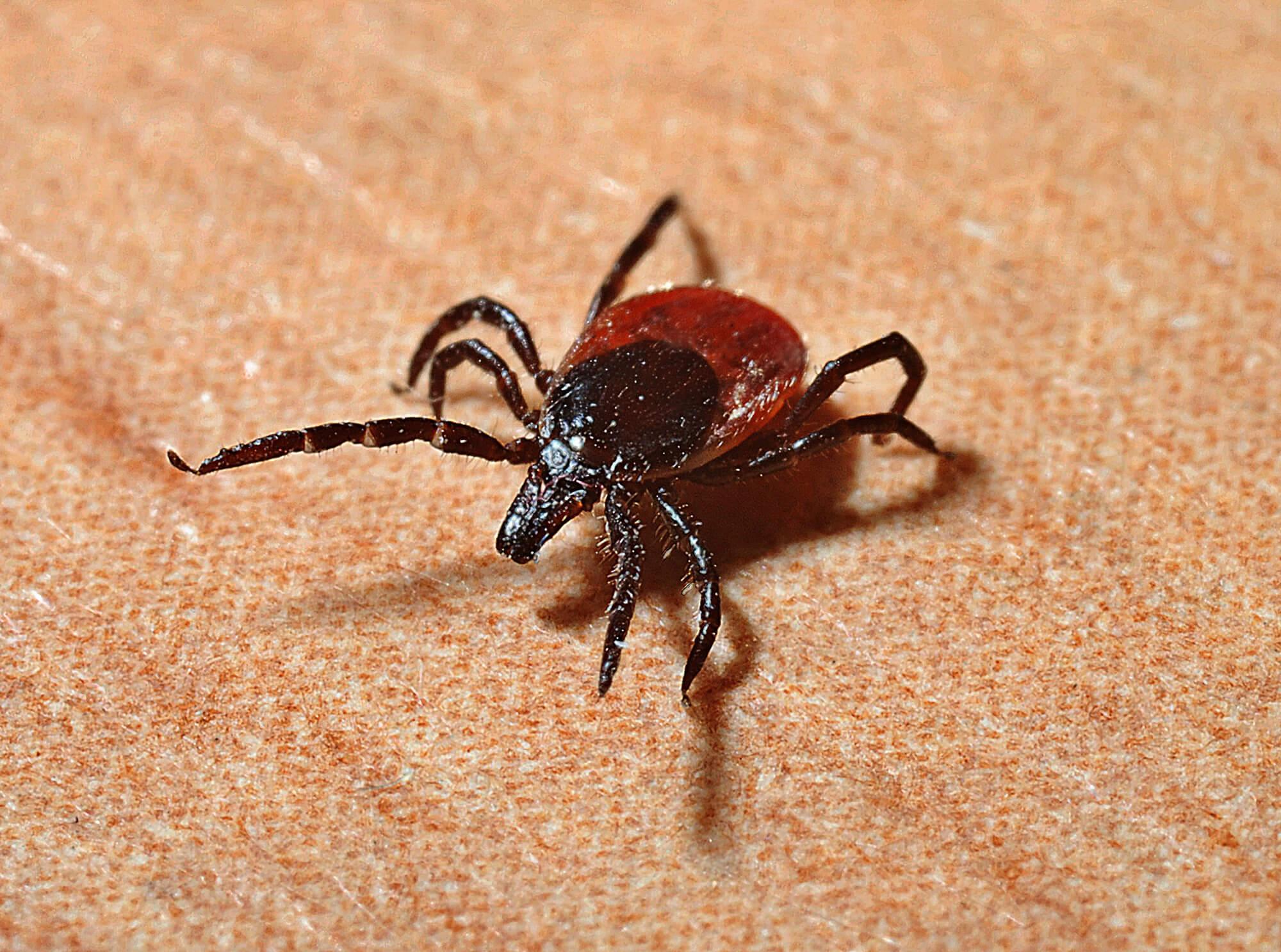 Bug on Linen
