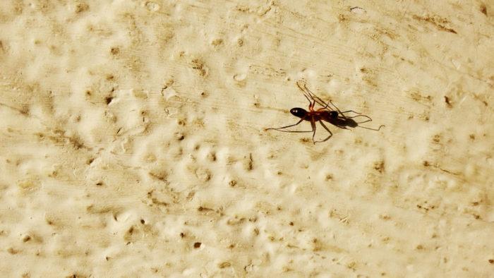 Ant Far Away