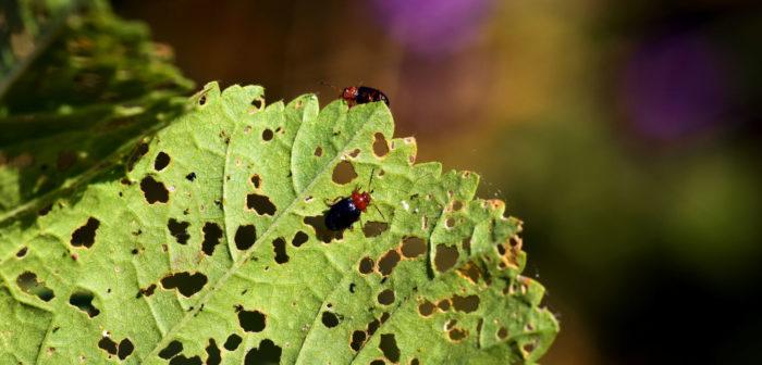 Bug Pests