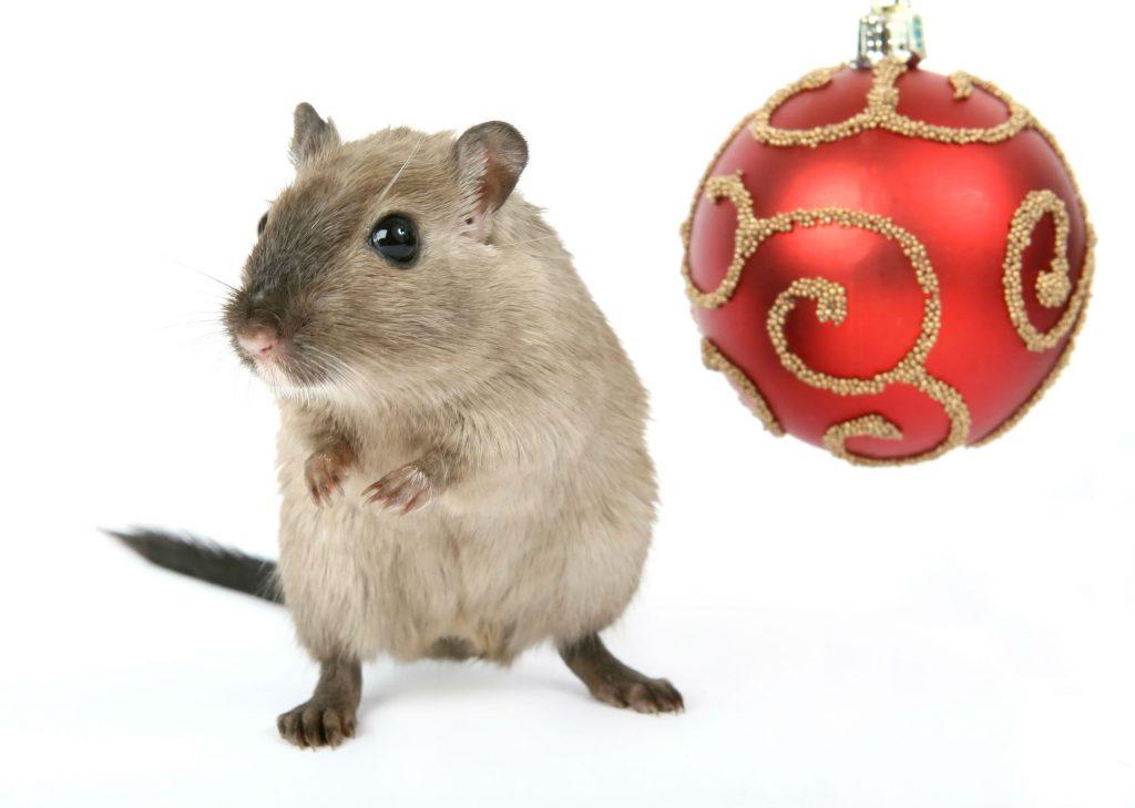 Pest Control over Christmas in Regina. Saskatchewan